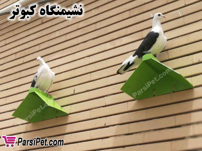 نشیمنگاه کبوتر