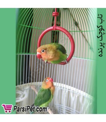 تاب کوچک قناری و مرغ عشق و طوطی